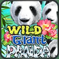 Wild-Giant-Panda
